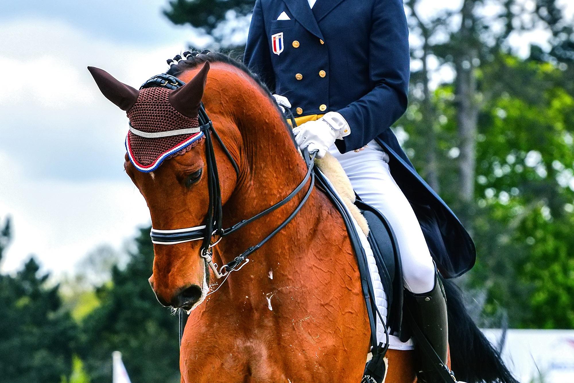 Dressage Horse Insurance