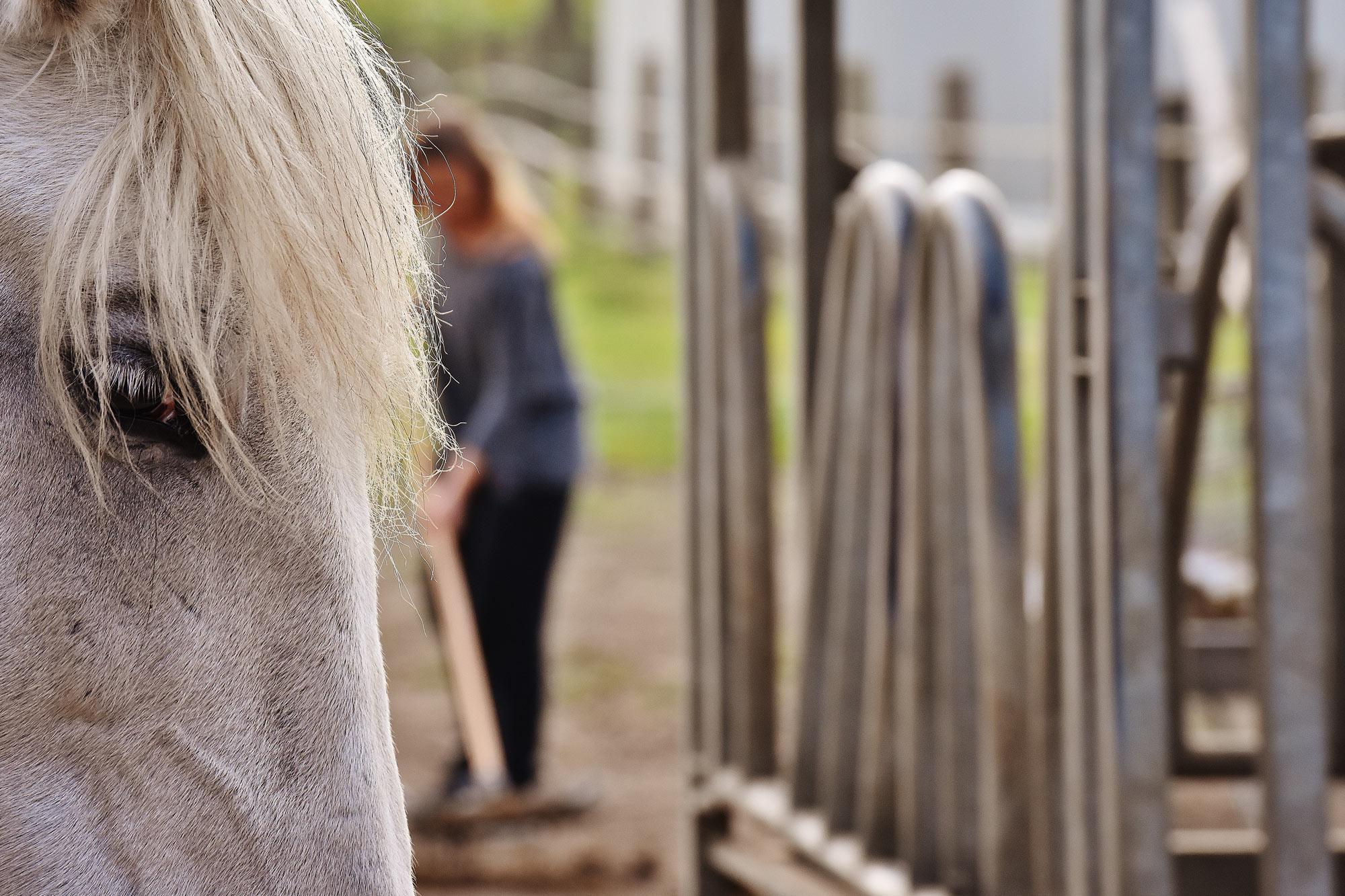 Horse Boarding Liability Insurance