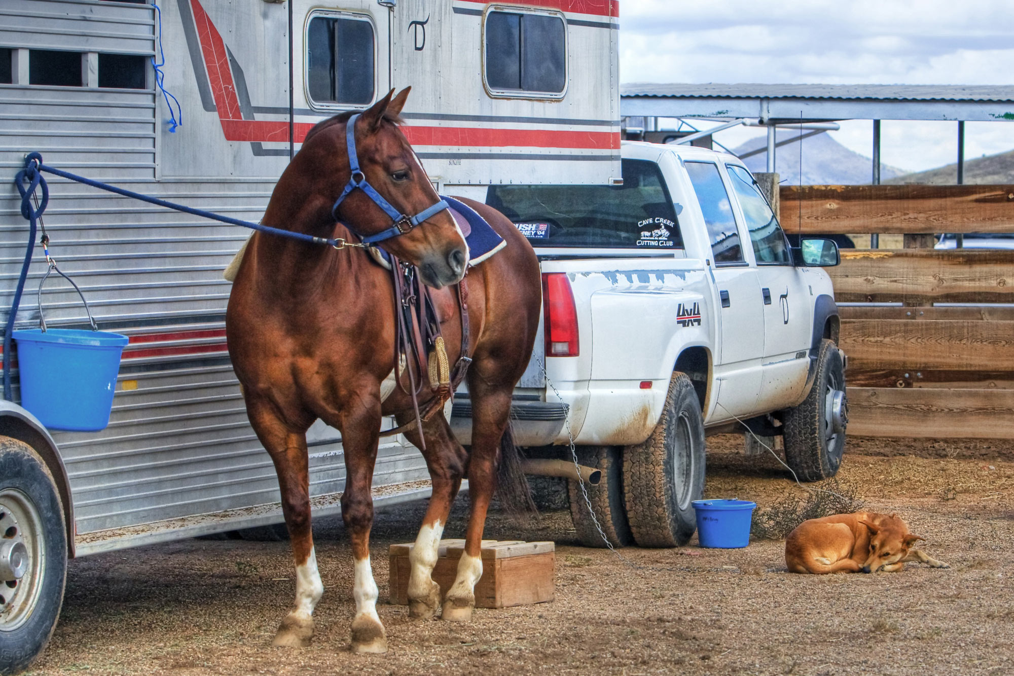 Image result for Horse Insurance: Protecting Your Beloved Equines