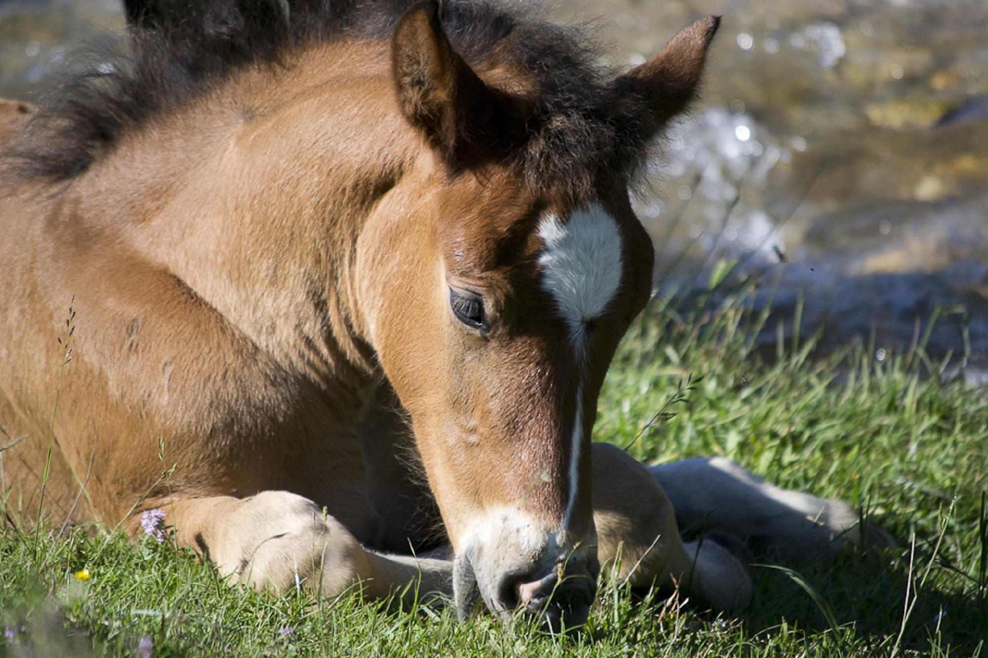 Prospective Foal Insurance