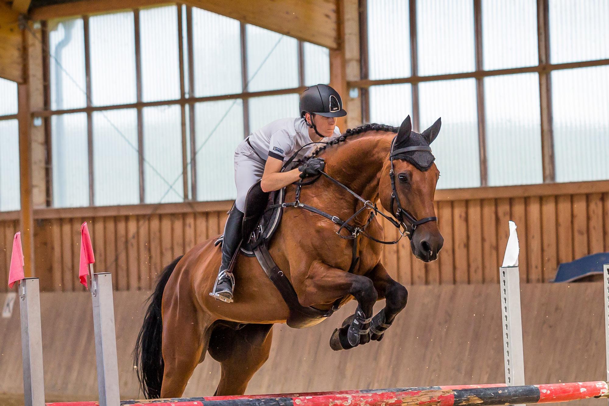 Sporthorse Insurance